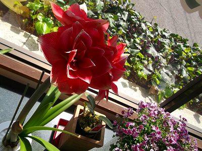 バラの成長