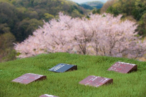 さくらの樹木葬