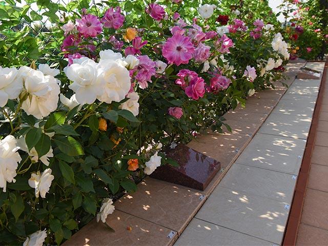 バラの樹木葬 個別タイプ