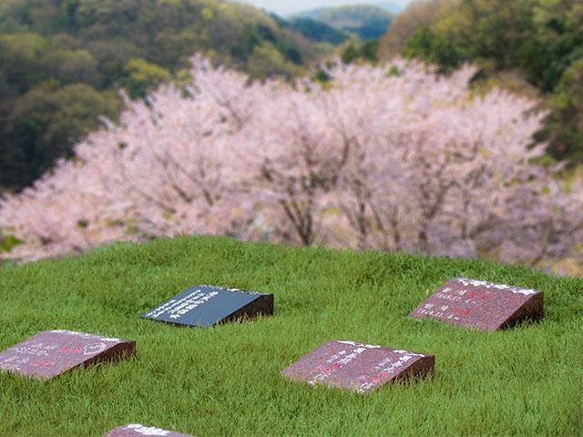 さくらの樹木葬 個別タイプ