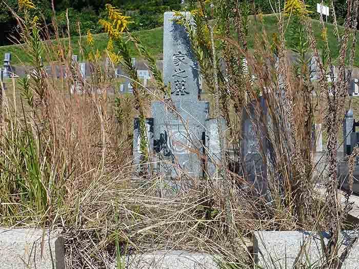 草ぼうぼうで、何年もお参りに来ていないお墓