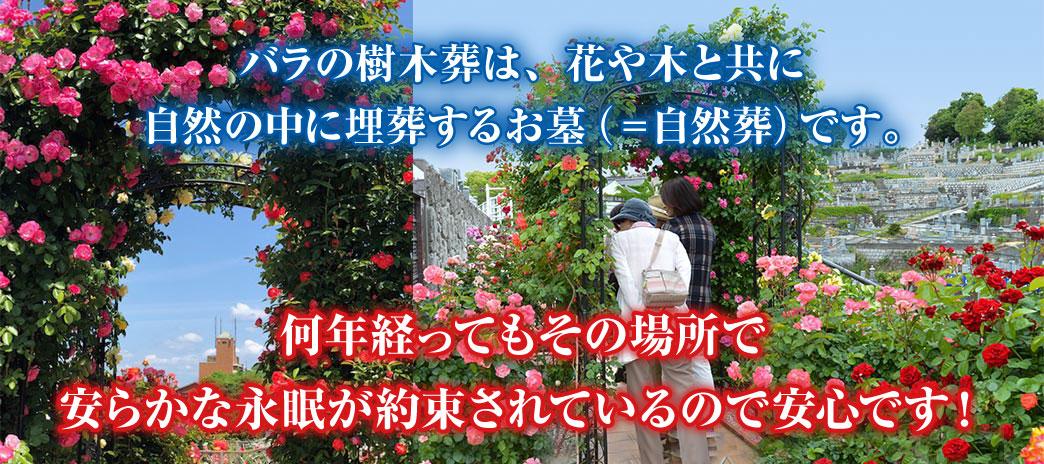 バラの樹木葬は、花や木と共に自然の中に埋葬するお墓(=自然葬)です。
