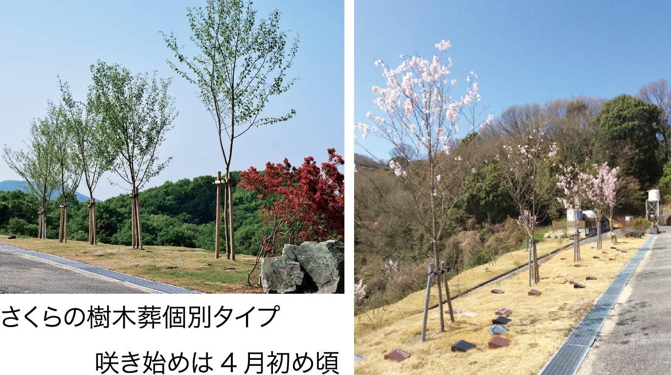 さくらの樹木葬「個別タイプ」