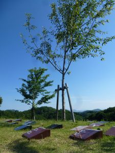 安心できる墓じまいから永代供養のかたち~樹木葬~