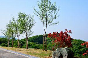 みどりが丘聖光苑 ① ~花と緑の霊苑 さくらの樹木葬~